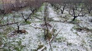 بارش تگرگ 230 میلیارد ریال به باغات کوهرنگ خسارت زد
