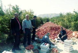 انتخاب دوازده کشاورز نمونه از شهرستان ابرکوه
