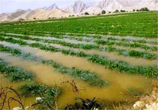 بیش از هزار میلیارد ریال خسارت به کشاورزی شیروان وارد شد