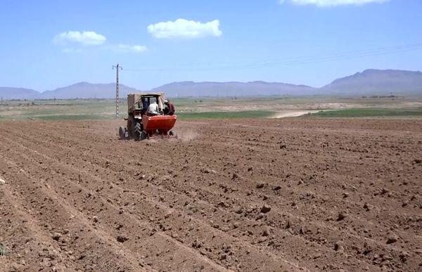 کاشت سیب زمینی در مزارع بوئین میاندشت
