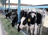 اختصاص کد اپیدمیولوژیک دام به 20 روستای شهرستان پردیس و دامداریهای صنعتی