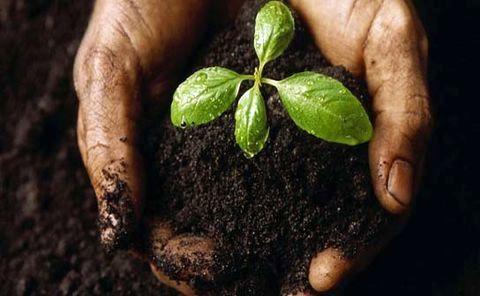 خاک بستری برای حفظ پوشش گیاهی و تامین امنیت غذایی است