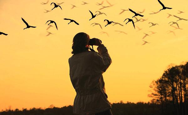 کسب درآمد میلیاردی از شکار پرندگان با دوربین