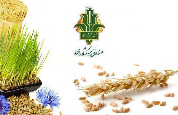 174 هزار هکتار از اراضی کشاورزی چهارمحال و بختیاری زیر پوشش بیمه قرار دارد