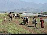 ۴۰۰ میلیارد ریال اعتبار سفرهای استانی دولت برای عشایر خراسان شمالی