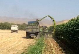 تولید بیش از 24 هزار تن ذرت علوفه ای در خرم بید