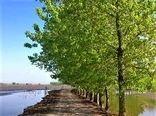 لایروبی 3 هزار هکتار آببندان در مازندران