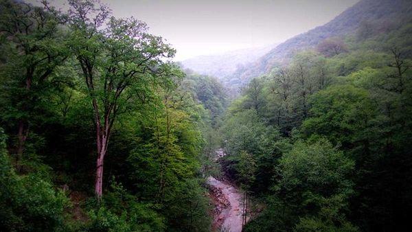 سند جنگلهای آقمشهد صادر شد