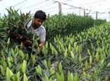 بیش از ۲ هزار اشتغال در بخش کشاورزی قزوین ایجاد شد