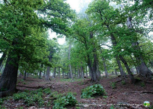 توسعه فضای سبز در 375 هکتار از عرصههای شهرستان دامغان