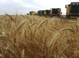 تولید 620 هزار تن گندم در اردبیل
