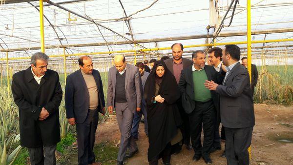 استاندار قزوین از یک واحد تولید محصولات گلخانه ای در شهرستان بوئین زهرا بازدید کرد