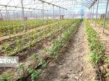 فاز اول گلخانه قباسرخ بیجار مهر ماه به بهرهبرداری میرسد