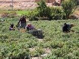 اجرای طرح ملی پوشش بیمه ای جوامع روستایی در نیریز