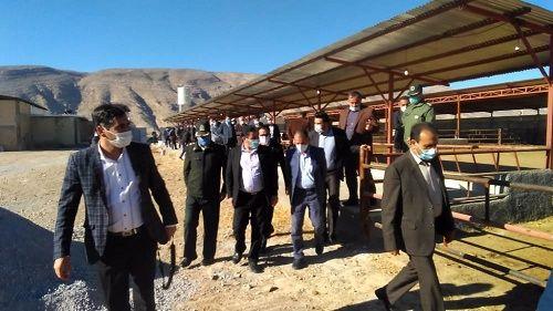 افتتاح گاوداری 30 رأسی در ارسنجان