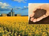 توزیع ۲۲ تن بذر دانه روغنی کلزا در آذربایجان غربی