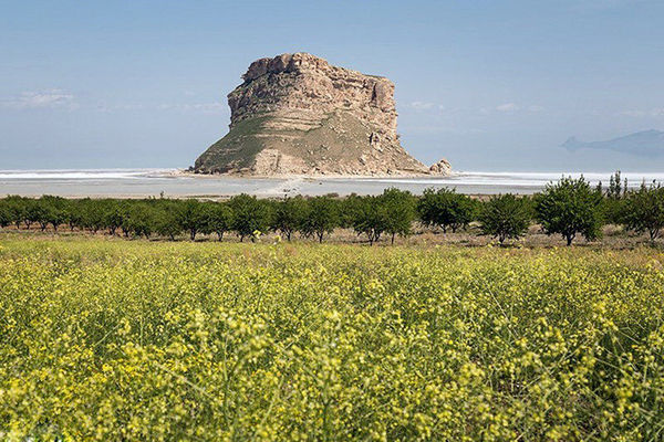 توسعه کشت محصولات کم آب بر  همچون سنجد در حوضه آبریز دریاچه ارومیه