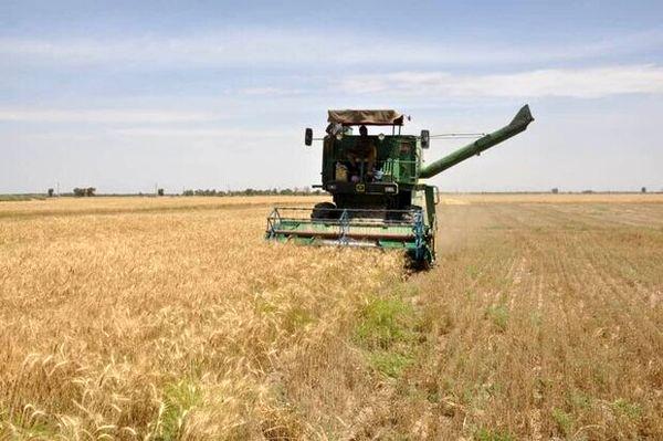 برداشت گندم در استان بوشهر از فردا آغاز میشود