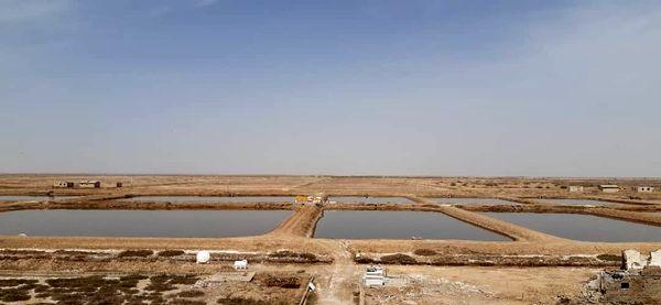 راهاندازی مزرعه پرورش آرتمیا در دشت فسندوز میاندوآب پس از  ۲۵ سال رکود