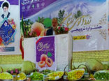 نقش مهم بخش کشاورزی در امنیت غذایی واشتغال پایدار در سیستان وبلوچستان