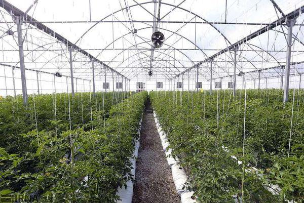 افزایش 60 هکتار به مجموعه گلخانهای شهرستان نهبندان