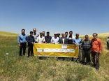 بهره برداران کشاورزی شهرستان قزوین با ویژگیهای کشت ارقام مختلف غلات در مزارع کشاورزی آشنا شدند