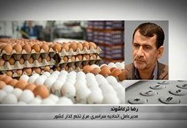 بازار تخم مرغ به تعادل میرسد