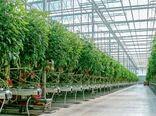 تولید اندامهای گیاهی برای تولید گل های زینتی و بذور سبزی وصیفی به عنوان مهمترین نهاده های مورد نیاز کشتهای گلخانه ای