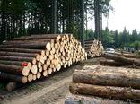 دستور وزیر جهاد کشاورزی برای خروج درختان شکسته از جنگلهای شمال