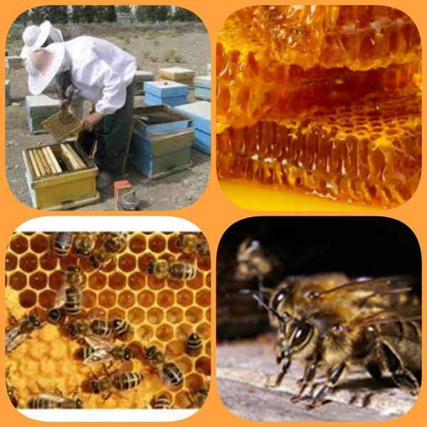 تولید بالغ بر ۲۴0 کیلوگرم فرآورده عسل در خراسان جنوبی