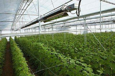 افزایش چشمگیر سرمایه گذاری در بخش گلخانه نسبت به سایر بخشهای کشاورزی