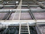 پرورش ماهی خاویاری با 25 لیتر آب