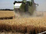 درخشش کشاورزان نظر آبادی در سال رونق تولید