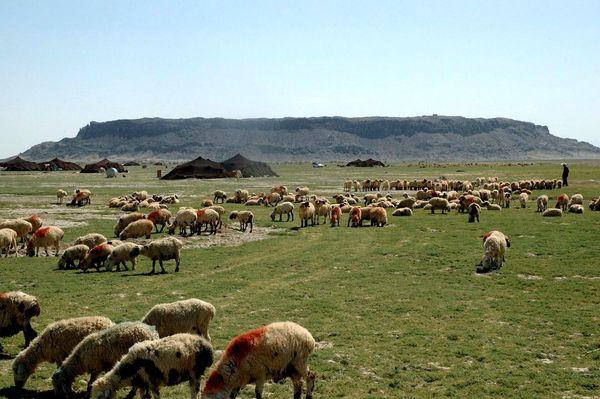 تولید 130هزار تن فرآورده دامی و زراعی