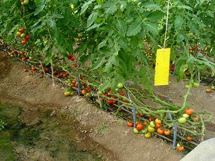 اجرای طرح کنترل عوامل خسارتزا در باغهای میوه شهرستان البرز