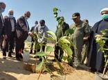 برگزاری آیین درختکاری در هرمزگان