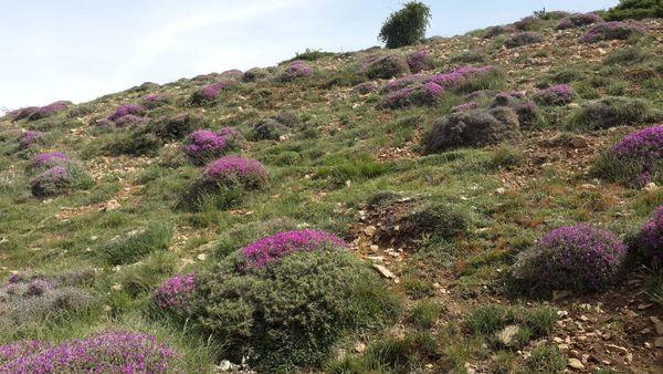 عملیات اصلاح و احیاء بیولوژیک در سطح 400 هکتار در شهرستان مهدیشهر