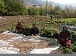 تشکیل 10 صندوق اعتباری خرد زنان روستایی