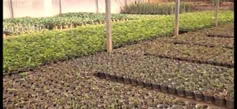 بهرهبرداری از سه گلخانه در شهرستان کاشان