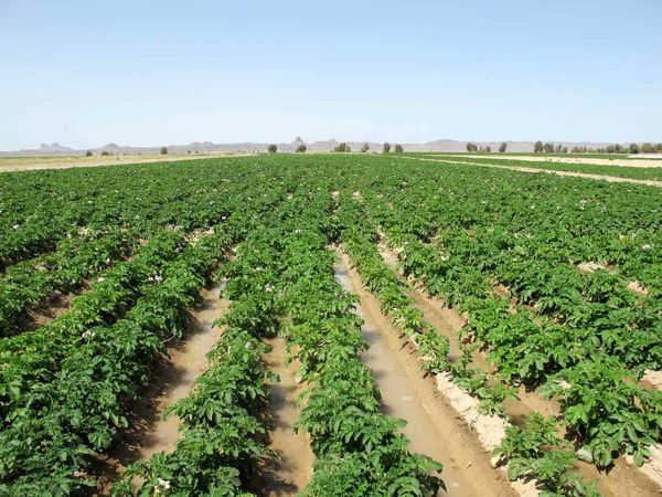 ثبت اطلاعات 57 درصد از اراضی کشاورزی سیستان و بلوچستان در سامانه سیاک