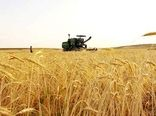 پرداخت ۹۵.۵ درصد بهای گندم کشاورزان خراسان شمالی