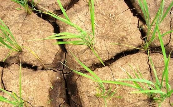 کاهش تولیدات کشاورزی در ارمنستان