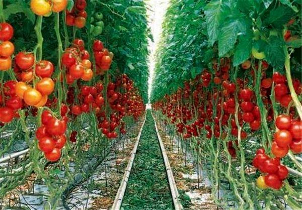 نوآوری در مزرعه برای حفظ محیط زیست