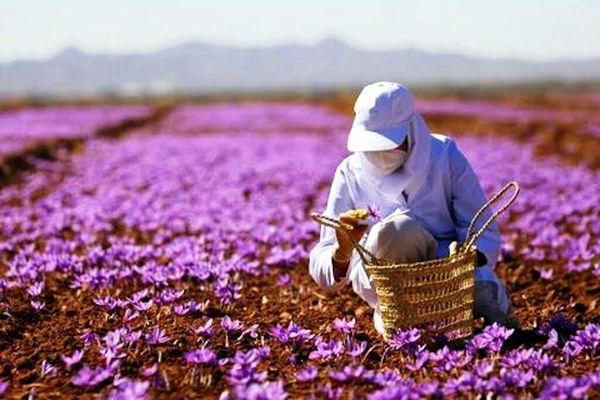 صدور 14 پروانه گردشگری کشاورزی در استان آذربایجان شرقی