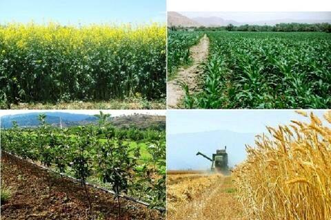 بالاترین سطح زیر کشت محصولات پاییزه کشور در استان خوزستان