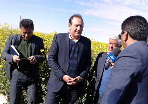 تولید بیش از 14 میلیون تن گندم در سال زراعی جاری