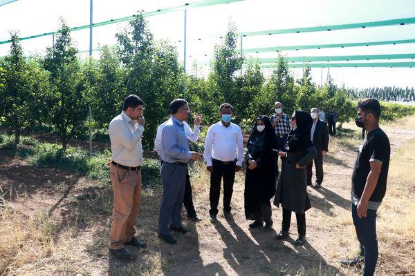 بازدید رییس سازمان جهاد کشاورزی استان قزوین از طرح سایبان باغات میوه
