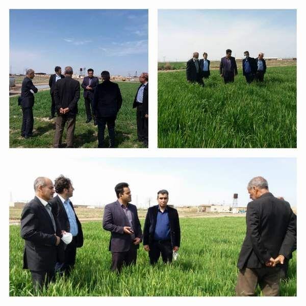 مبارزه با علف های هرز در 20هزارهکتار از مزارع غلات شهرستان ورامین