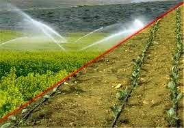اجرای سیستم آبیاری نوین در 7 هزار هکتار از اراضی شیروان