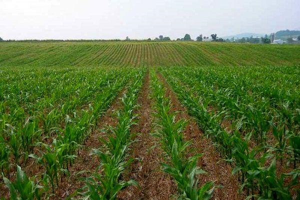 بیش از ۲۷ هکتار از اراضی زراعی و باغی آذربایجان غربی به چرخه تولید کشاورزی بازگشت